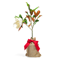 Top Ten Holiday Decor Gifts